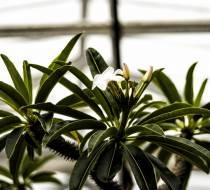 HSC_Botanischer-Garten-3