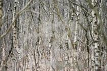Der Wald vor lauter Bäumen_#