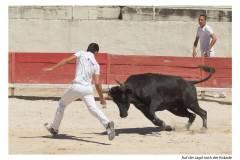Stierkampf 6 - Auf der Jagd nach der Kokade