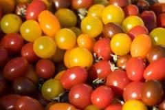 ASC__Provence 2018-Tomatenvielfalt Farben_*