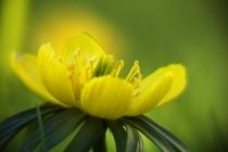 Bilder vom Frühling