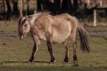 CHK-Wildpferde3_#