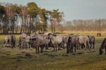 CHK-Wildpferde8_#