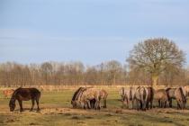 CHK-Wildpferde5_#