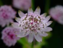 Botanischer_Garten-11