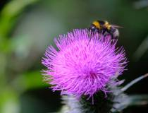 Botanischer_Garten-2