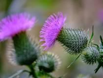 Botanischer_Garten-3
