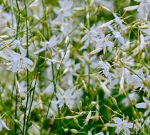 Botanischer_Garten-5
