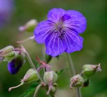 Botanischer_Garten-7