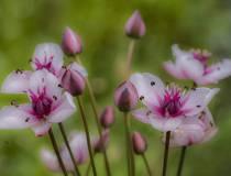 HSC_Botanischer-Garten-1