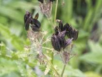 HSC_Botanischer-Garten-6