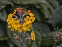 HSC_Botanischer-Garten-7