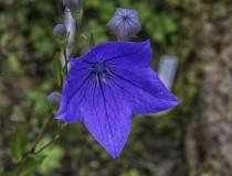 HSC_Botanischer-Garten-9