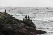 11 - Pazifik bei Tofino