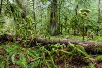 9 - Gemäßigter Regenwald im Cathedral Grove