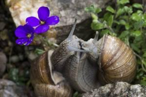 Lass-Blumen-sprechen