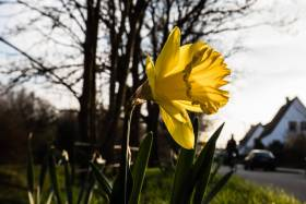 Monatsthema Frühlingserwachen