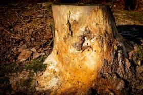 Monatsthema Holz