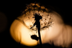 web_Christof Haverkamp_Silhouette_*