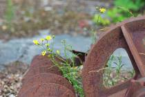 WMI_Natur-mit-rostigem-Eisen8-