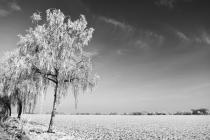 Bild 1 Schneelandschaft