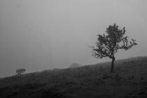 Bild 16 Hollager Berg im Nebel