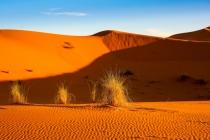 Bild 11 Wüstengras