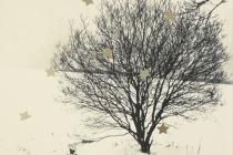 FWO-Winter 1