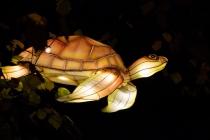 Zoo-Lights