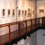 Füchse-Ausstellung 01