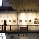 Füchse-Ausstellung 04