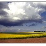 Kultivierte Landschaft - Friedemann Meier