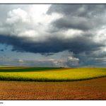 Friedemann Meier - Kultivierte Landschaft